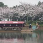 大覚寺華道祭 舟席