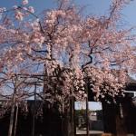 妙覚寺 4月8日