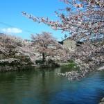 琵琶湖疏水 4月8日