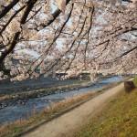 高野川 4月