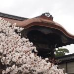 仁和寺 勅使門と御室桜