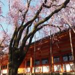 平安神宮 4月