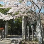 大井神社 4月