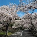 七谷川沿い 和らぎの道