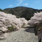 亀岡 七谷川 4月
