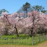 京都御苑 近衛邸跡 4月9日