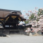 京都御所 4月9日