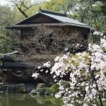 京都御苑 九条邸跡 4月9日