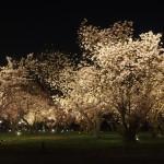 二条城 ライトアップ 4月9日