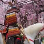 平野神社 桜花祭 4月
