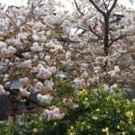 千本ゑんま堂 4月