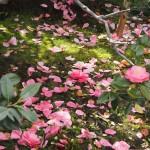 地蔵院 椿寺 4月