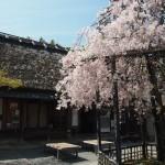 化野念仏寺 4月11日