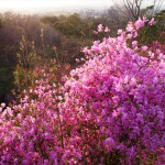 鴻ノ巣山 4月