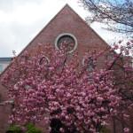 同志社大学 礼拝堂 4月12日