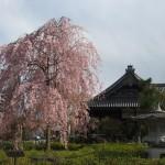 妙満寺 4月12日