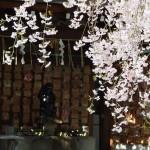 岡崎神社 4月12日
