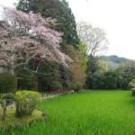 大田神社 4月13日