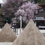 上賀茂神社 4月13日