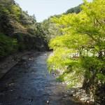 清滝川 4月