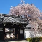 妙覚寺 善明院 4月14日