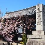 妙覚寺 4月14日