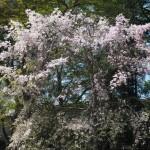 鷺森神社 4月14日