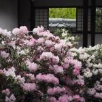 随心院の石楠花