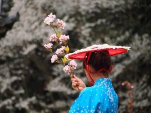 豊太閤花見行列 花見踊りにて