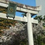 晴明神社 4月15日