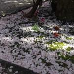 雨宝院 4月15日