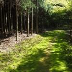 神護寺 苔の道