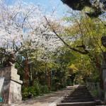 粟田神社 4月