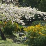京都御苑 出水の小川 4月19日