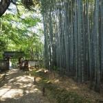 地蔵院 竹の寺 4月