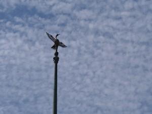 祇園閣と空