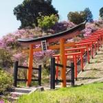 獅子崎稲荷神社 4月