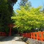 大田神社 新緑