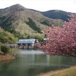 大野ダム 4月