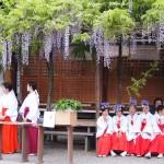西院春日神社 藤花祭 4月