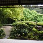 雨のお庭は美しい
