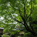 新緑の詩仙堂