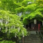 泉涌寺 今熊野観音寺 4月