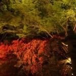 青蓮院 ライトアップ 霧島の庭