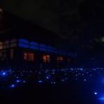 青蓮院 ライトアップ 5月