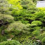 永観堂の緑
