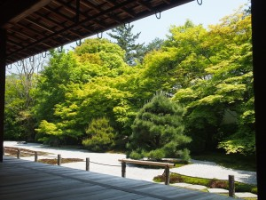 南禅寺 天授庵の新緑