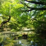 天授庵 池泉庭園