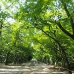 下鴨神社 糺の森
