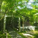 新緑の蓮華寺